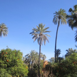 Palm & orange trees in Alcazar Seville