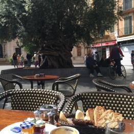 Breakfast on Cort terrace